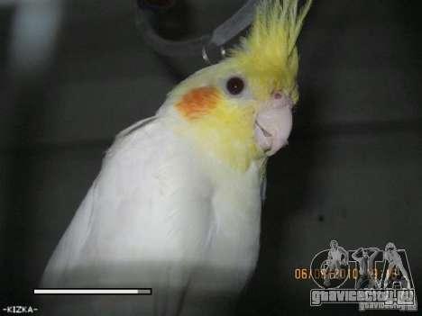 Загрузочный экран Попугаи Кореллы beta для GTA San Andreas седьмой скриншот