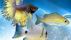 Новые рыбы (морские)