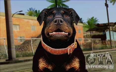 Rottweiler from GTA 5 Skin 3 для GTA San Andreas третий скриншот
