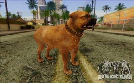 Rottweiler from GTA 5 Skin 2 для GTA San Andreas