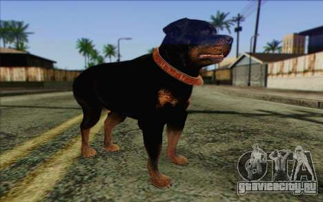 Rottweiler from GTA 5 Skin 3 для GTA San Andreas