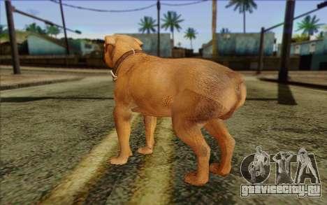 Rottweiler from GTA 5 Skin 2 для GTA San Andreas второй скриншот