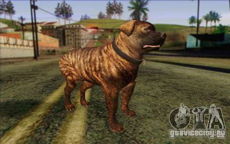 Rottweiler from GTA 5 Skin 1 для GTA San Andreas