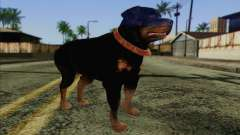 Rottweiler from GTA 5 Skin 3 для GTA San Andreas
